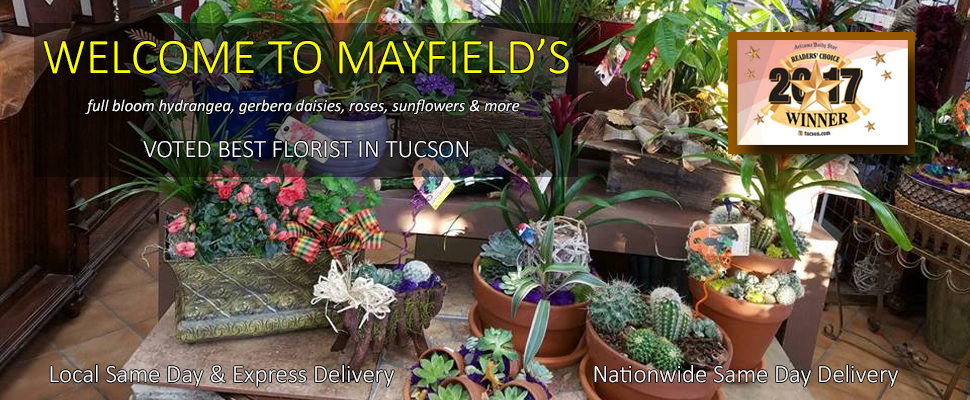 Mayfield Florist, Voted Best Florist Tucson Arizona