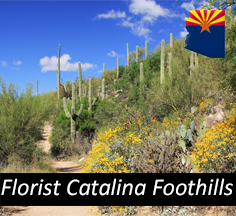 Florist Catalina Foothills Arizona